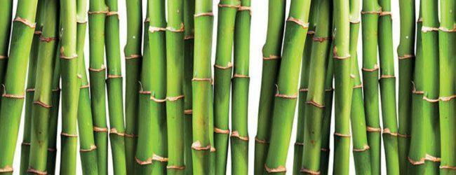 studio HR, kuhinje po mjeri, Dan Kuchen staklena zidna obloga sa slikom Bamboo green